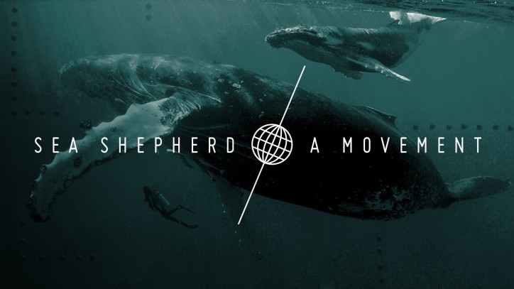 Sea Shepherd launches non-profit legal practice venture