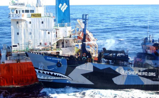 Japan whaling ships to set sail for Antarctic on December 1