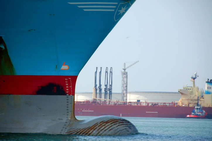 Arrival of container giant: first 20,000-TEU vessel to call on Rotterdam