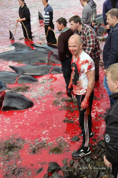Cruise Lines Continue to Support Mass Murder of Whales in Faroe Islands