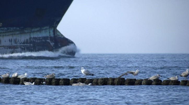 USCG detained Ro-Ro ship