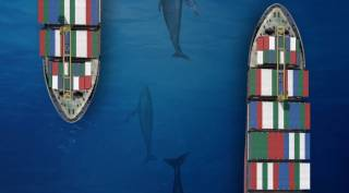 The Panama Canal Resumes Seasonal Measures to Protect Migrating Marine Life