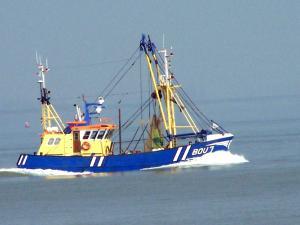 Photo of BOU.7 DE ENIGE ZOON ship