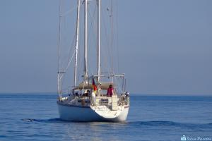 Photo of SCHATANA ship