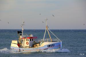 Photo of S 544 DORTIGI ship