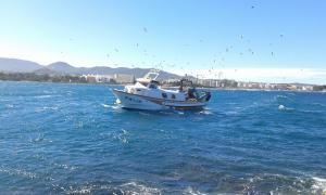Photo of TANITDOS ship