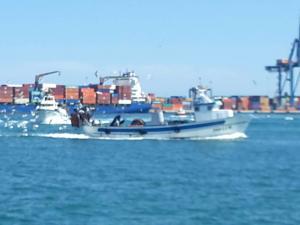 Photo of PEPE MASES ship