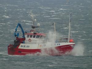 Photo of SPARKLING STAR BCK29 ship