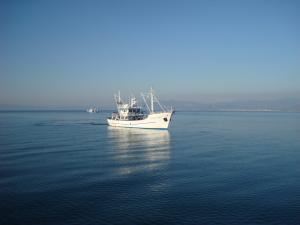 Photo of THODORA ship