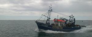 Photo of FLOR DA BEIRA ship