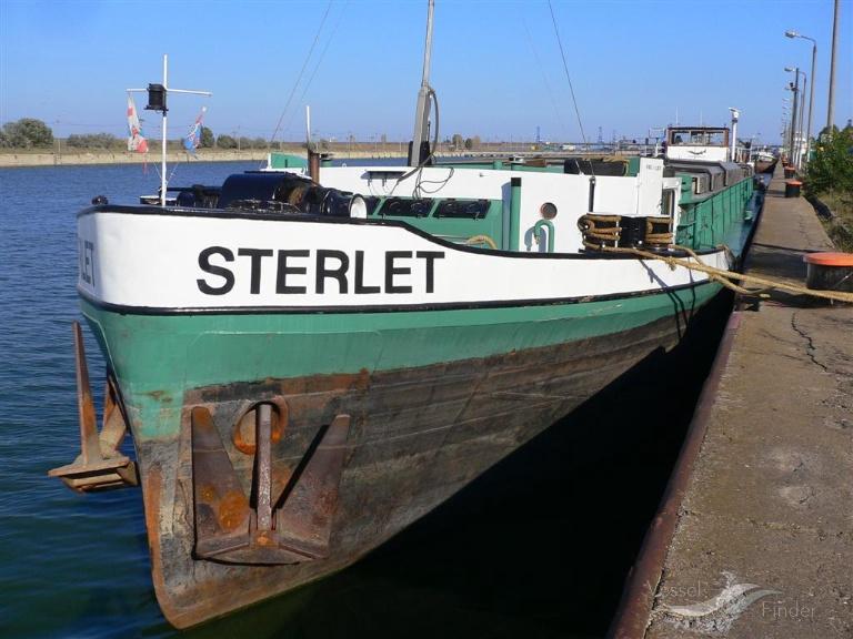 STERLET photo