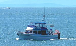 Photo of WHITE TIGER ship