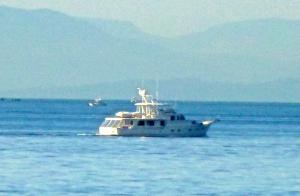 Photo of ARINA ship