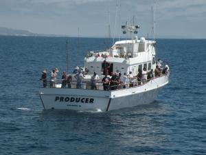 Photo of PRODUCER ship