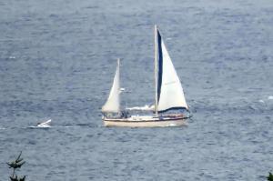 Photo of SAUDADE ship