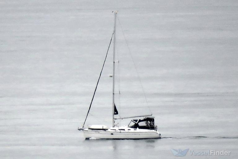 SEA MONKEY photo