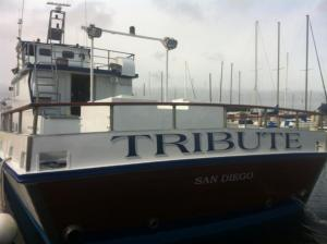 Photo of TRIBUTE ship
