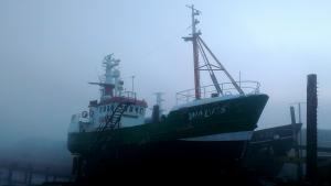 Photo of WALVIS (GUARDVESSEL) ship