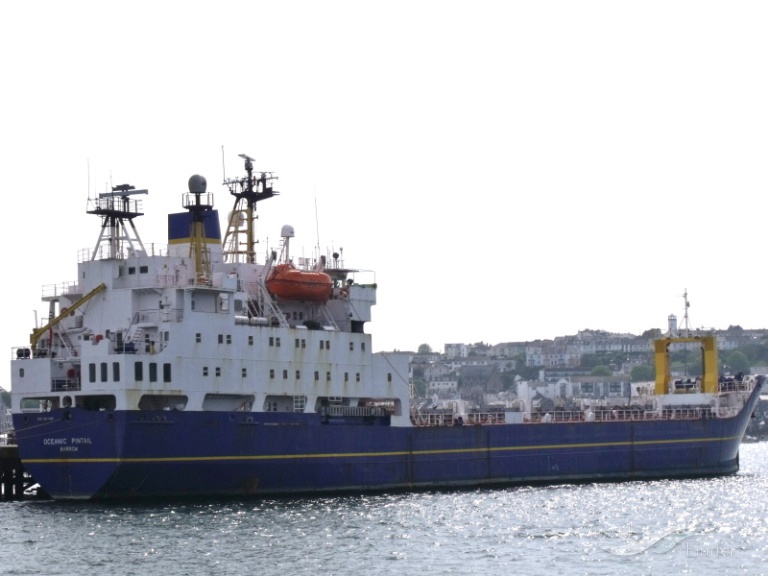 OCEANIC PINTAIL photo