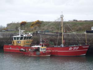 Photo of STILL OSTREA ship