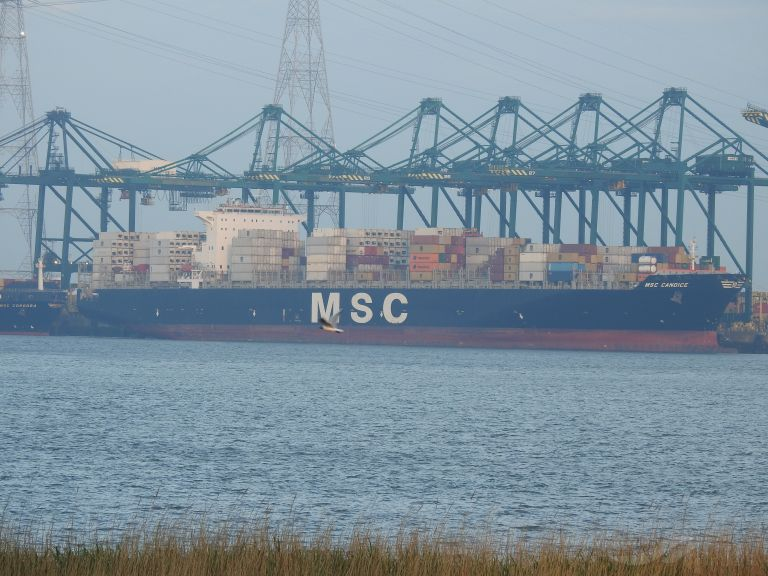 MSC CANDICE, Container Ship - Details and current position - IMO