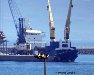 Photo of ASCL MICHELE ship