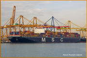 MSC LAUREN (MMSI: 353428000)