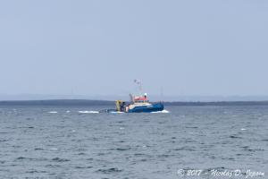 Photo of SKINFAXE R ship