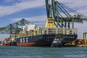 Photo of MSC AMALFI ship