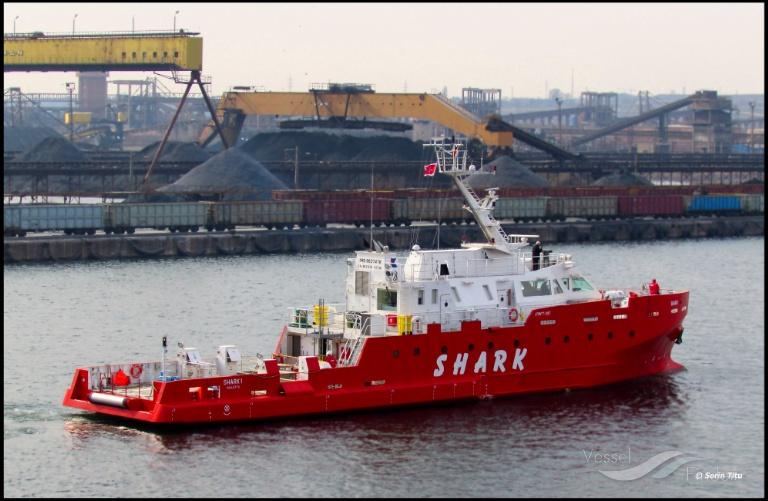 SHARK 1 photo