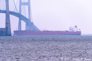 Photo of STI VENETO ship