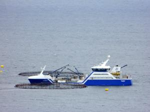 Photo of RO ARCTIC ship