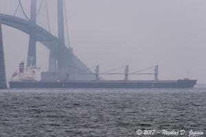 Photo of DRAFTDODGER ship