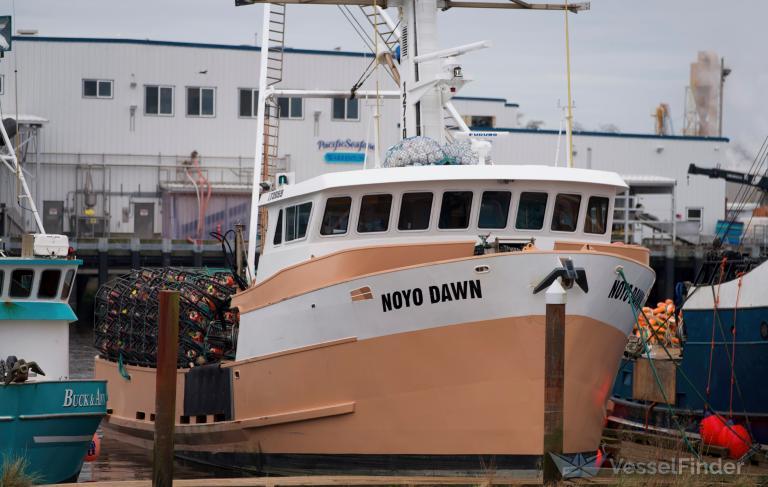 NOYO DAWN photo